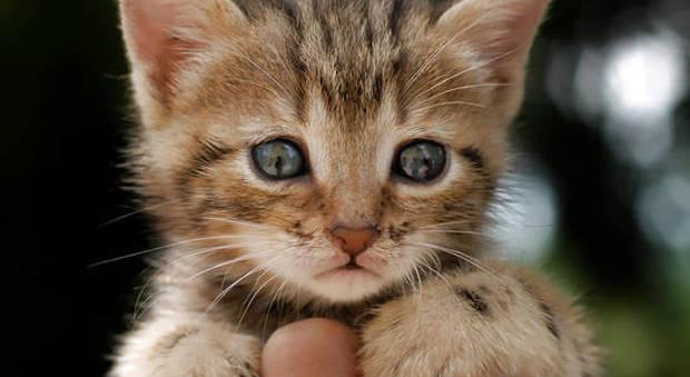 Salva un gattino randagio malato e riceve una multa di 166 euro
