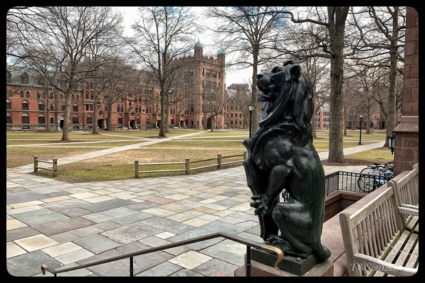 Old Campus a Yale, deserto (Foto Terry Sanders)