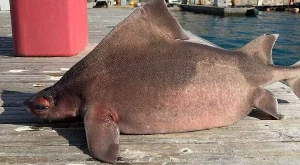 """Il """"pesce porco"""" rinvenuto morto a Portoferraio (immag pubbl da Isola d'Elba App su Fb)"""