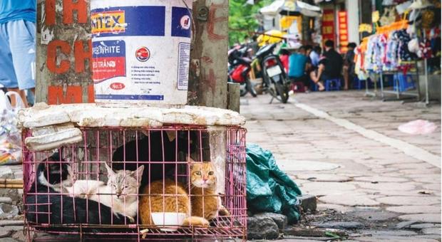 Un milione di gatti macellati ogni anno, il rapporto choc pubblicato dalle associazioni (immagini pubblicate nel rapporto di Four Paws e Change for Animals Foundation)