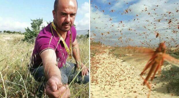 Milioni di cavallette invadono la Sardegna: 50 aziende devastate nel Nuorese