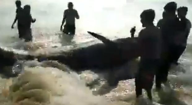 Balene arenate sulla spiaggia, i residenti sfidano il coprifuoco anti Covid e ne salvano 120