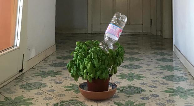 immagine Bottiglie e kit: i trucchi per dissetare le piante in vaso durante le ferie