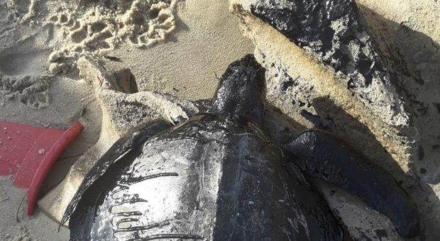 Brasile, emergenza petrolio: invasi 1.500 chilometri di spiagge del Nordest