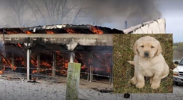 Il terribile incendio che ha ucciso tutti i cani tranne uno. (Immag e video pubbl su Fb da Doggy Style Kennels)