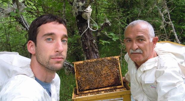 A rischio estinzione l'ape che fa bella l'Umbria: «Trecento alveari a selezione genetica per salvare l'Apis Mellifera Ligustica»