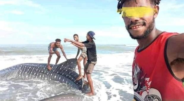 Lo squalo balena si spiaggia. Invece di salvarlo lo cavalcano come fosse una tavola da surf. (immagini pubblicate dallo scrittore Elizah Palme su Fb)