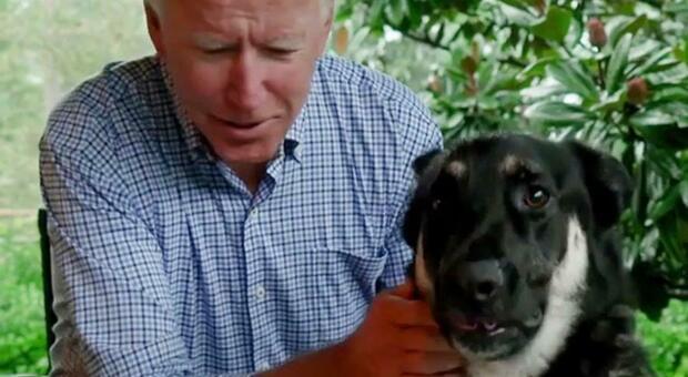 Joe Biden, caviglia slogata: cade giocando con il cane