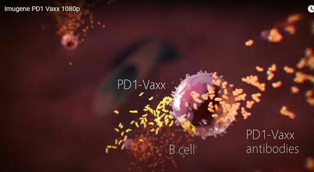 Tumore, vaccino potrebbe inibire la crescita: è in fase di sperimentazione sull'uomo, ecco come funziona