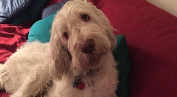 I cani ci amano: parola di scienziato