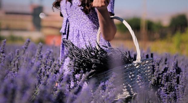 Vacanze in viola: ecco i campi di lavanda più instagrammabili di Italia, Francia e Spagna