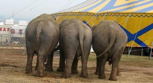 Elefanti, giraffe e leoni affamati: Coldiretti dona carne, frutta e verdura per gli animali dei circhi rimasti senza lavoro