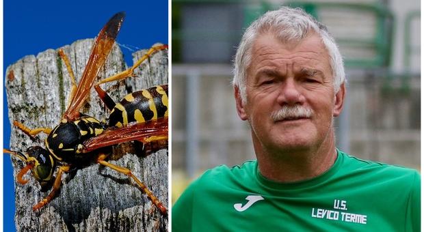 Trento, punto da uno sciame di vespe, l'ex portiere Gunther Mair in shock anafilattico