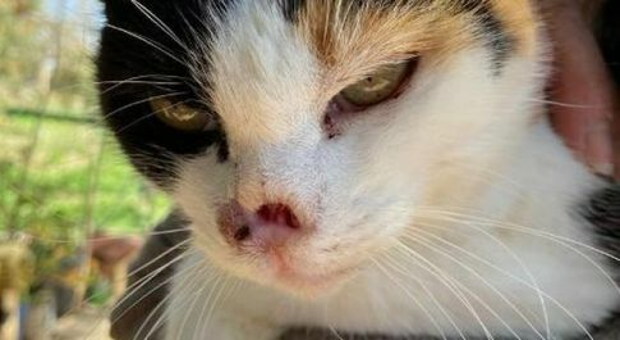 Lenticchia, il gatto che ha vinto il tumore grazie al web