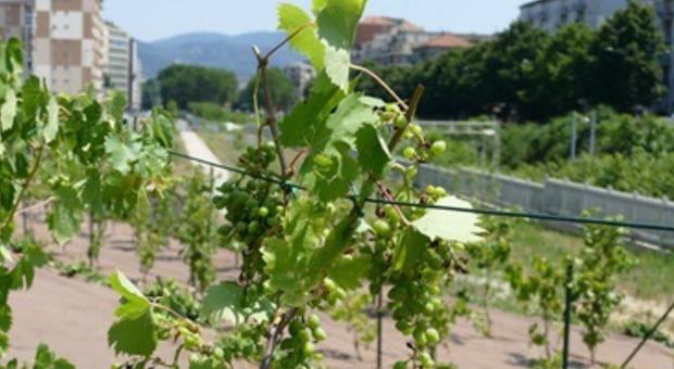 Il Covid-19 e l'agricoltura Mancano braccianti e l'Italia cerca di riaprire le frontiere