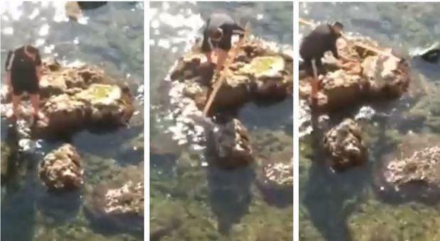 Polpo intrappola gabbiano, interviene un pescatore ma il finale è a sorpresa