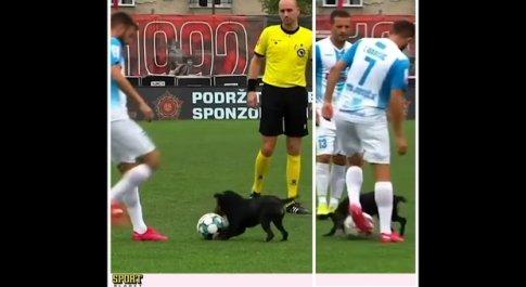 Il cagnolino invade il campo da calcio e dribla i giocatori del campionato bosniaco (immagini e filmato diffusi su Fb da Sport Bladet.