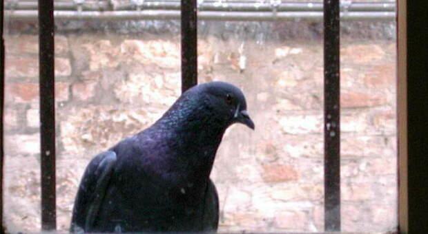 Spara ai piccioni, centra la finestra del vicino: paura in centro