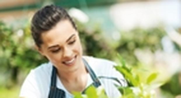immagine Dalle piante effetti benefici: il verde contrasta lo stress