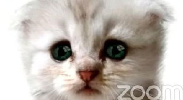 Avvocato dimentica il filtro su Zoom, il giudice in videoconferenza lo vede come un gatto parlante