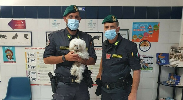 Esercizio abusivo della professione, truffa e maltrattamento di animali: denunciati due veterinari