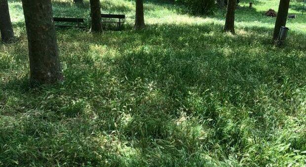 La Quercia: Campo Graziano sembra una giungla