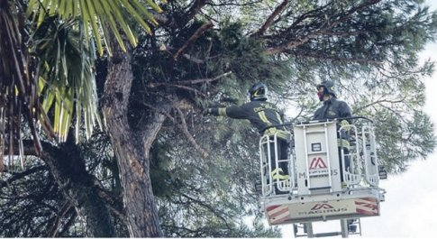 Super vento, a Perugia 90 emergenze per incendi e alberi crollati