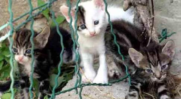 Torino, bimbo di 5 anni getta gattina dal balcone e la uccide: e sui social scatta la gogna