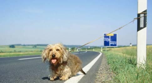 Leo si allontana da casa e si perde, la Polizia ritrova il border collie e lo riporta al proprietario