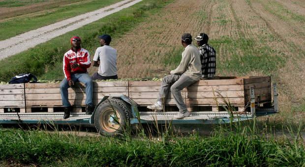 Migranti, sì alla sanatoria con paletti per braccianti agricoli, colf e badanti