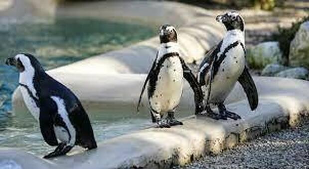 Australia, bambino muore ferito da un pinguino giocattolo di Sea World