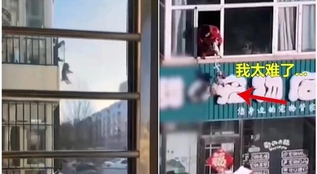 Coronavirus, il cane deve fare pipì: il padrone in quarantena lo cala dalla finestra del quarto piano (immagini diffuse da Weibo)