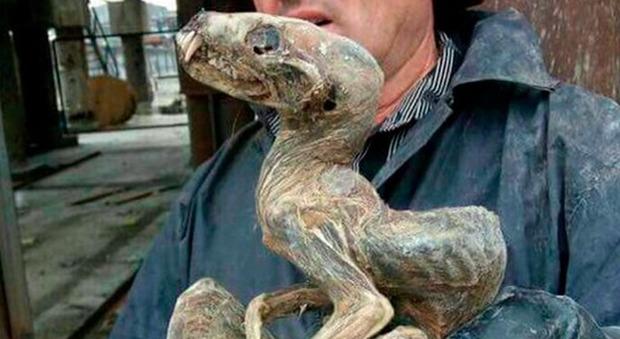 I minatori che hanno portato alla luce la creatura parlano di una specie antecedente ai dinosauri