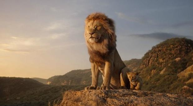 Il Re Leone vola al cinema. Ma il Wwf: «Tra 25 anni potrebbe non esserci più nessun Simba»