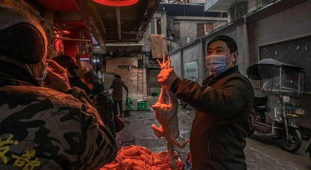 Covid, studio Oms a Wuhan: Stati Uniti «preoccupati» esortano la Cina a fornire tutti i dati