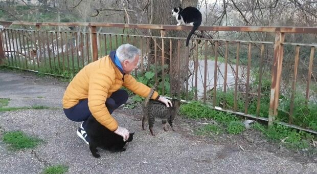 Volontari cercasi per aiutare Gianfranco Volpe che salva i gatti dalla strada
