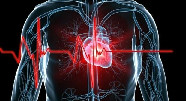 Salute, scoperto il primo atlante del cuore umano: una mappa per studiare e curare le malattie cardiache