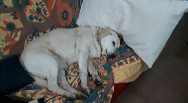 La storia a lieto fine del cane Margot: scomparsa in Sabina e ritrovata a Milano