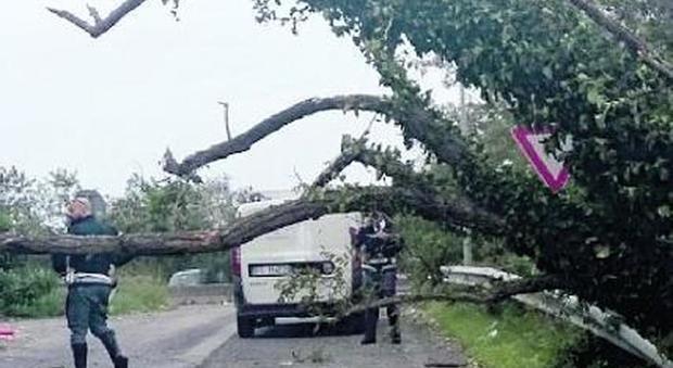 Roma, albero crollato su scuolabus, la paralisi del Servizio Giardini