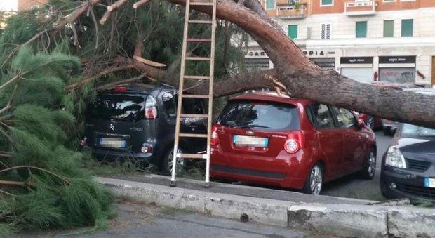 Roma, monitorati 82mila alberi: controlli e tagli di quelli pericolosi