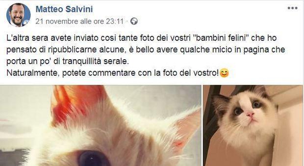 Gatto Isoardi E Salvini Su Facebook Laltra Faccia Animalista Di