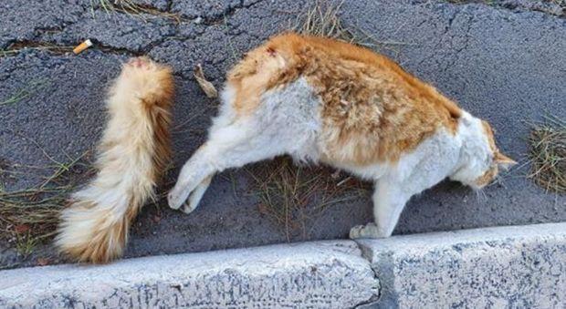 Gatto seviziato e ucciso con i petardi: «Qualcuno ha pensato di festeggiare il nuovo anno così»