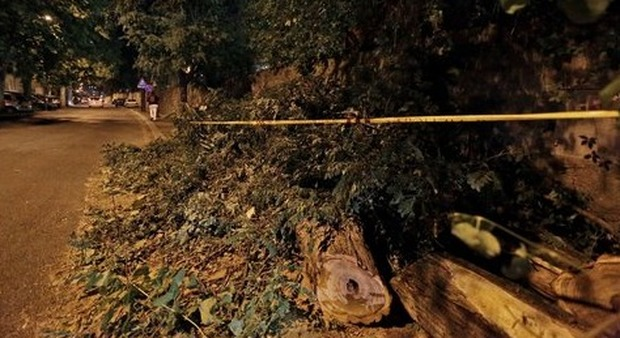 Roma, albero crollato su uno scuolabus, l'autista: «Sembrava una bomba»
