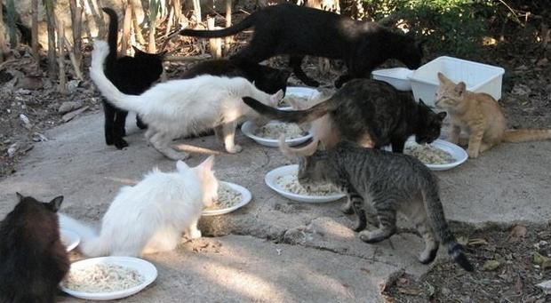 Mamma rinchiude la figlia in cantina per 26 anni dandole solo cibo per gatti: «Volevo proteggerla»