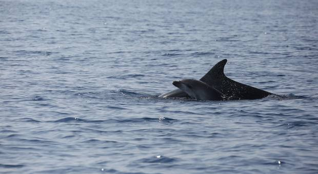 Ostia, la mamma-delfino che commosse il web ha un nuovo cucciolo