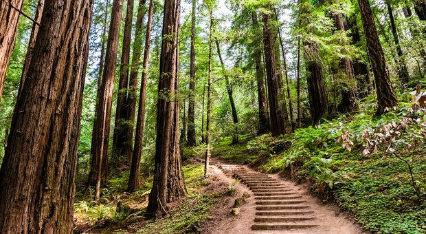 """Con una """"dose"""" di foresta salgono le difese e si riduce l'ansia"""