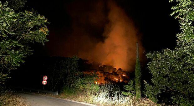 Incendi nel Cassinate, ulivi distrutti e danni all'ex discarica. «In cenere gli alberi dei nostri nonni»
