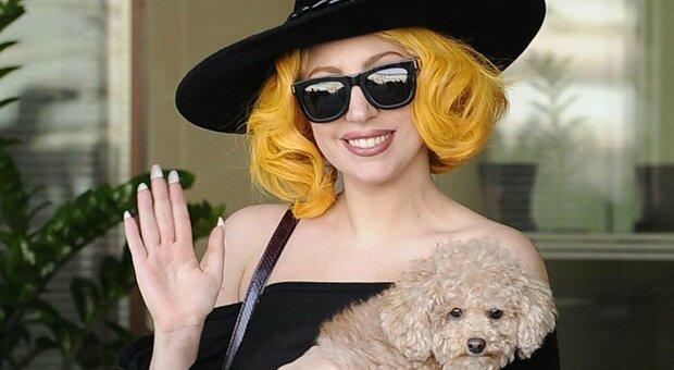 Lady Gaga, il giallo dei cani: ritrovati legati a un palo da una passante (che avrà ricompensa)