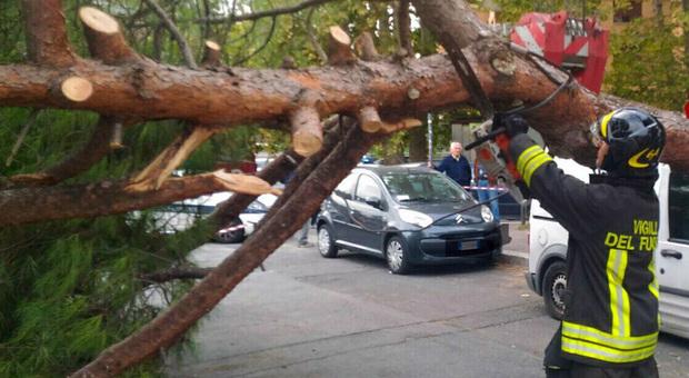 Bufera sui Castelli Romani: alberi abbattuti, strade bloccate, auto schiacciate dai rami e da un semaforo (Foto di Luciano Sciurba)