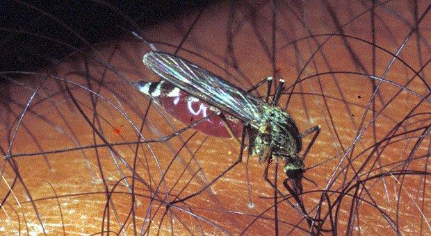 Anzio, casi di febbre Chikungunya: bloccate le donazioni di sangue